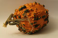 Cucurbita ornamental - Autumn Squash II.jpg