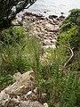 Cyperus insularis C. ustulatus Heenan and de Lange (AM AK295176).jpg