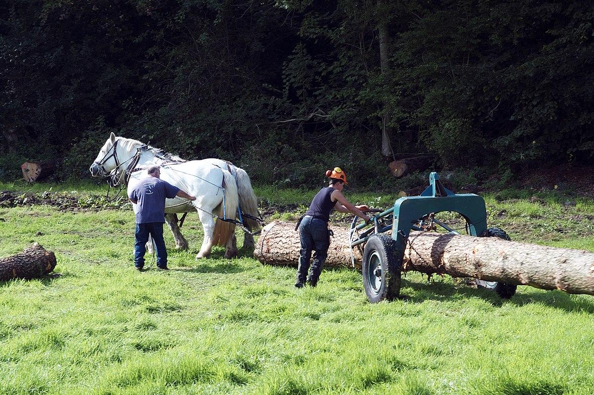 D bardage wikip dia - Couper des arbres sur son terrain ...