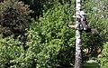 Dětmarovice, čarodějnice - panoramio.jpg