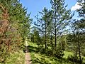 D-BW-BL-Albstadt - Naturschutzgebiet Mehlbaum 1544.JPG