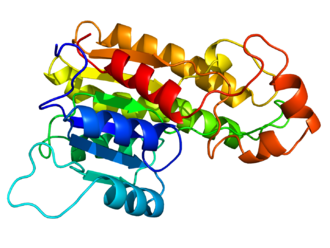 Homology modeling - Homology model of the DHRS7B protein created with Swiss-model and rendered with PyMOL