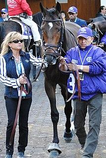 Catholic Boy (horse) American Thoroughbred racehorse