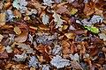 Dail yr Hydref Pentrefelin Autumn Leaves - geograph.org.uk - 609544.jpg