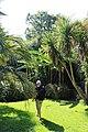 Dans le jardin exotique de la Roche Jagu.jpg