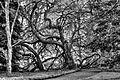 Das Refugium von Skogman und Skogsfru ---- Insel Mainau, Bodensee (8182201960).jpg