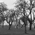 De boomgaard van het voormalig kasteel Poelgeest, tussen de bomen restant van het kasteel - Koudekerk aan den Rijn - 20127230 - RCE.jpg
