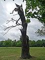 Dead tree, Warren Road (1) - geograph.org.uk - 1861445.jpg
