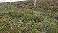 Deer Fence (An Sgòr Dubh) on Mar Lodge Estate (29JUL17) (3).jpg