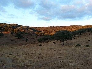 Dehesa de la Sierra de Aracena.jpg