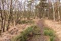 Diakonievene. Natuurgebied van It Fryske Gea 019.jpg