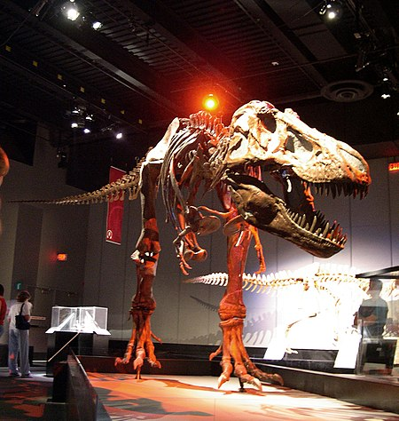File:Dinosaur skeleton at Tyrrell.jpg