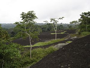 Dja Faunal Reserve-109438
