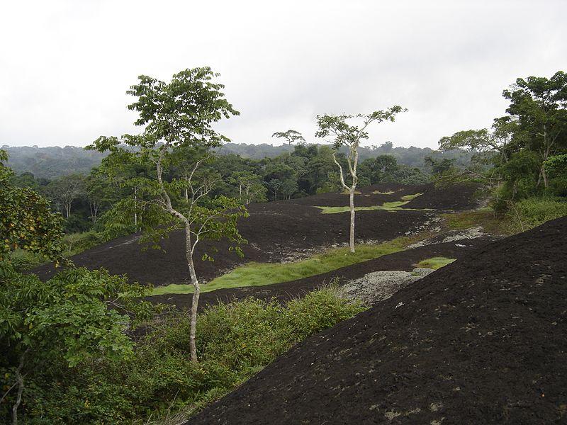 Dja Faunal Reserve-109438.jpg
