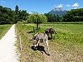 Donkey @ Saint-Jorioz (50488580712).jpg