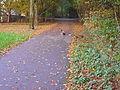 Ducks out for a walk.JPG