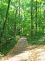 Dunn's Woods southwestern trail.jpg