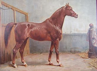 Hanoverian horse - This print from 1898 depicts a sturdy, versatile Hanoverian.