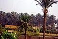 Egypt, Cairo - panoramio - Alx R (20).jpg