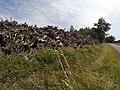 Empilement de souches de pins après désouchage d'une coupe rase 2018 Landes de Gascogne 10.jpg