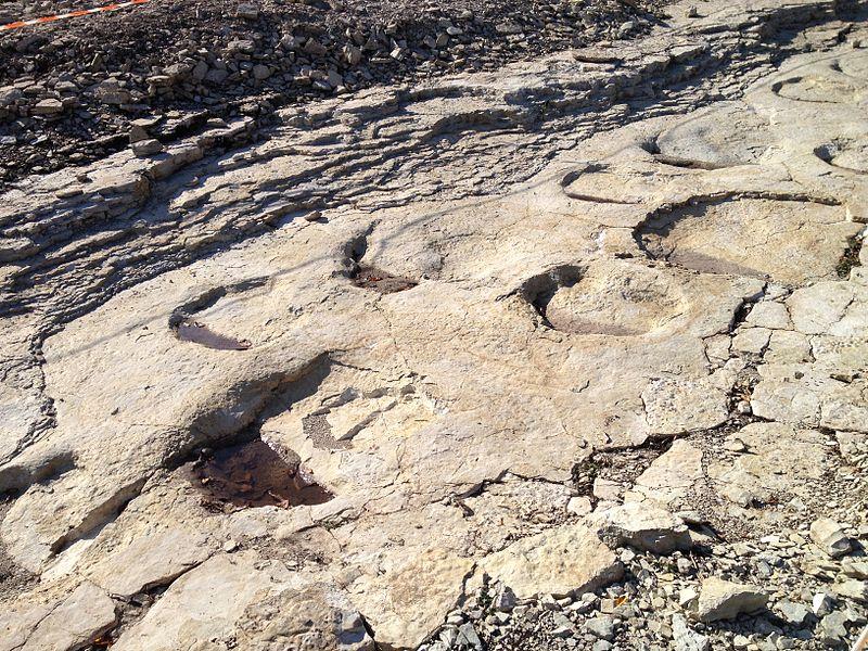 Empreintes fossiles de sauropodes sur la commune de Plagne (Ain), sur le site de «Dinoplagne». (Paléoichnologie)