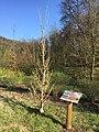 Erinnerungsbaum Silke Wenzel.jpg