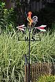 Erlenbach - ZSG Helvetia 2011-08-06 16-44-42.JPG