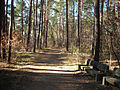 Erlenstegen Waldweg.JPG