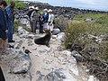 Espanola - Hood - Galapagos Islands - Ecuador (4871503104).jpg