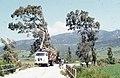 Eucalyptus logging. Wind swept. Palomas river mouth. Andalusia. (37047549784).jpg