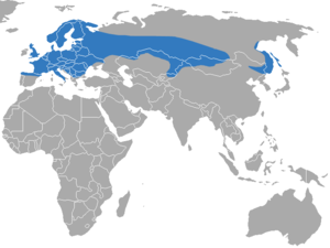 Eurasian water shrew - Image: Eurasian Water Shrew area