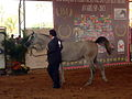 Expo inter do Arabe 130913 REFON -19.JPG
