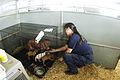 FEMA - 15179 - Photograph by Liz Roll taken on 09-09-2005 in Louisiana.jpg