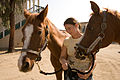 FEMA - 33363 - A Callifornia Horse owner exercises her horses at the temporary animal evacuee shelter.jpg
