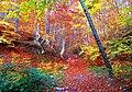 Fall Foliage In South Italy (236558843).jpeg