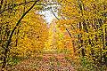 Fall in Gatineau Park (7981046245).jpg