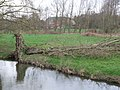 Fallen Tree, Attlebridge - geograph.org.uk - 351852.jpg