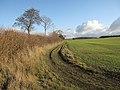 Farm track - geograph.org.uk - 1637317.jpg