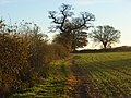 Farmland, Dunsden - geograph.org.uk - 1059258.jpg