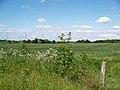 Farmland near Wynyard Woodland Park - geograph.org.uk - 449795.jpg