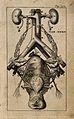 Female genito-urinary system. Engraving, 1686, after R. de G Wellcome V0007786EC.jpg
