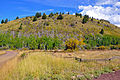 Fern Mountain in Hart Prairie (5057691526).jpg