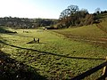 Field, Manor Farm, Galmpton - geograph.org.uk - 1188294.jpg