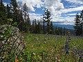 Field of Wildflowers in Wrinkly Face Provincial Park.jpg