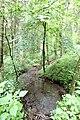 Fischbach-Oberraden (Eifel); Bachlauf Finstergraben a.jpg