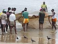 Fishermen hauling nets Sri Lanka Photo209.jpg