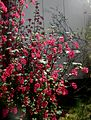 Flickr - Per Ola Wiberg ~ mostly away - red flowers.jpg