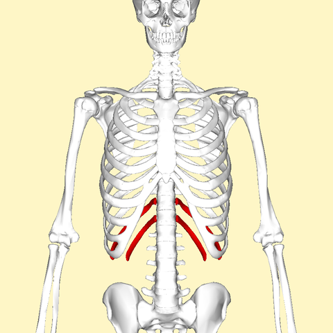 Image Result For Can Rib Bones