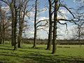 Floodgate Plantation - geograph.org.uk - 750200.jpg