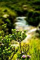 Flora da Cachoeira da Fumaça.jpg